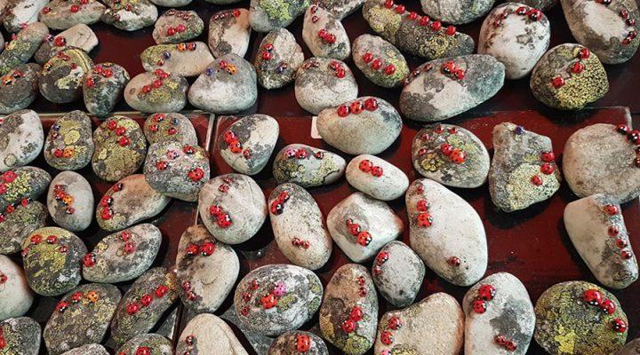 paljon kiviä ja leppäkerttuja